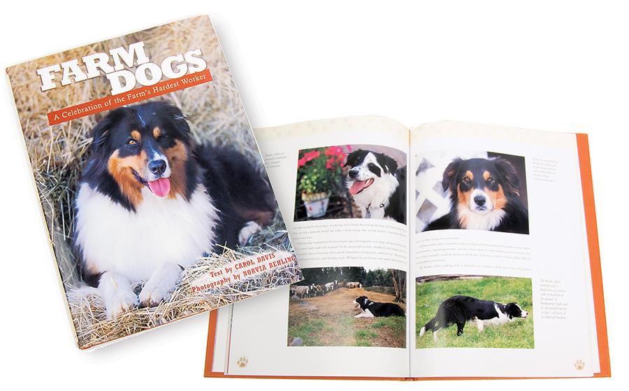 Voyageur Press Dog Book