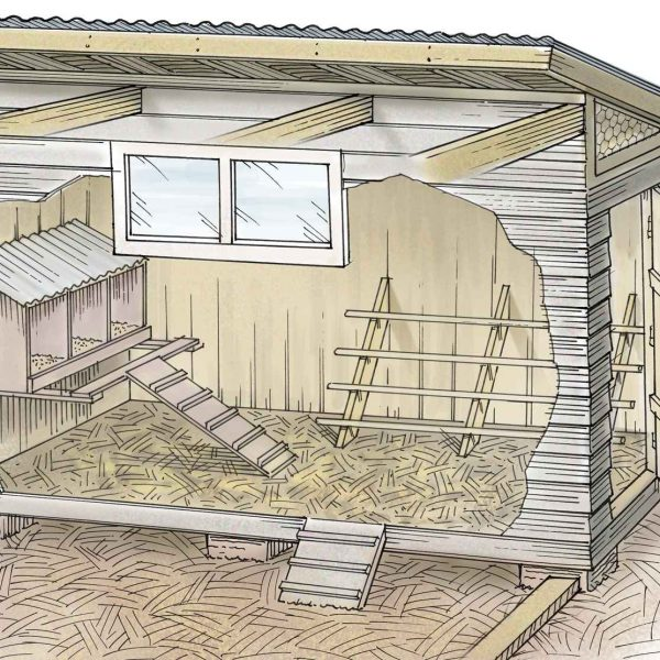 TSC Chicken Coop Illustration for Out Here Magazine